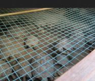 Le tartarughe sequestrate