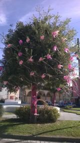 Piazza La Vergine in rosa