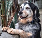 cane al canile