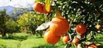 arance-Fonte foto associazione tumori toscana