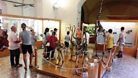 Visite gratuite al Museo di Storia Naturale di Firenze per le associazioni che si occupano di disabilita'