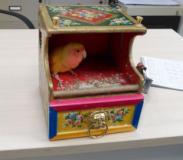 Pasqualino nella scatola delle schede del gioco del lotto