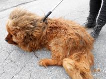 Cane maltrattaoto fonte foto comunicato stampa