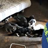 46 gatti abbandonati e chiusi in un appartamento a Firenze