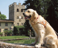Giornata nazionale del cane guida 2019
