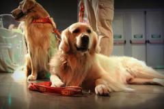 Scuola italiana cani salvataggio (foto Antonello Serino Redazione Met)